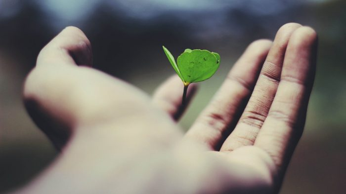 Hand holding a floating green plant