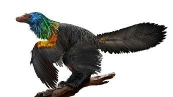 A feathered dinosaur
